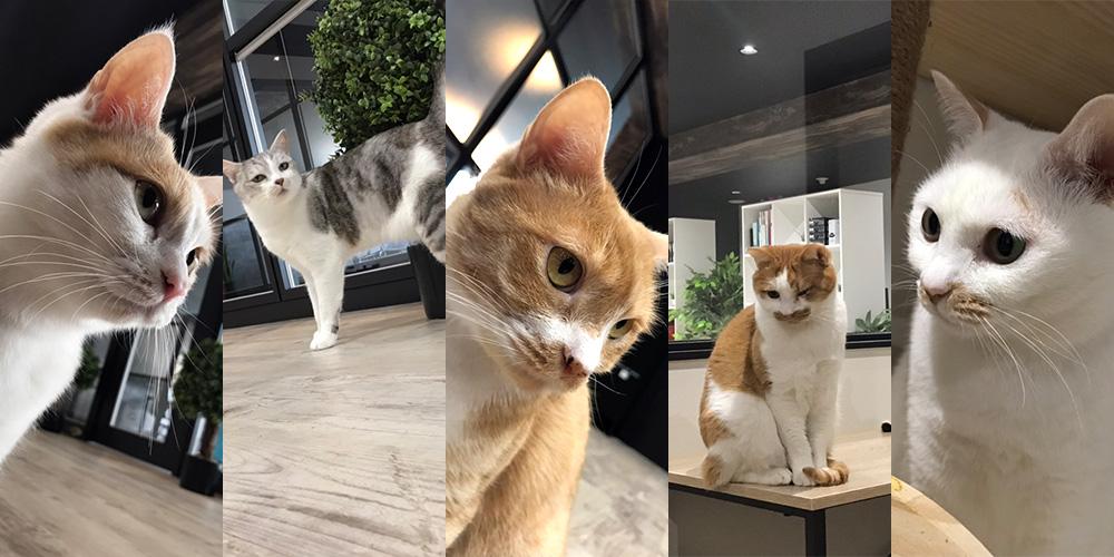 スクリューアドベントの猫